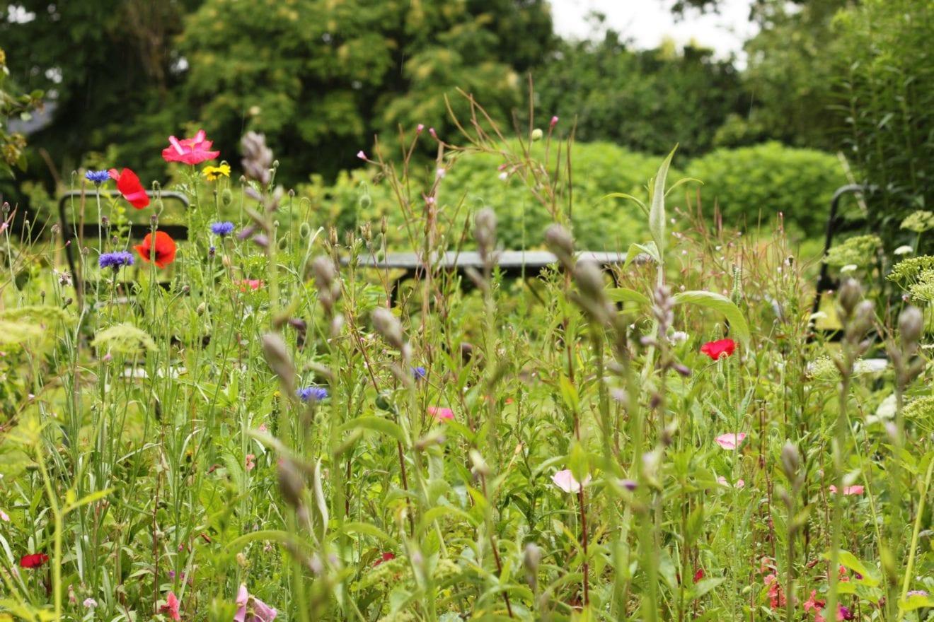 Golfbane-græs eller vild blomstereng – hvilken plænetype er du?