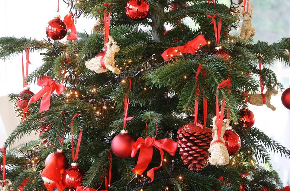 Hjemløse Juletræer har fået vokseværk