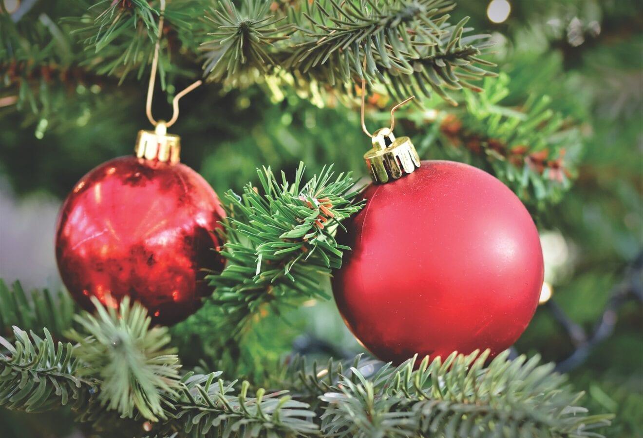 Danske hjem invaderes af insekter i julen